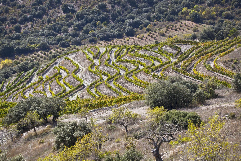 Catalunya-vi-cava-denominacio-origen-cellers-vinya 015