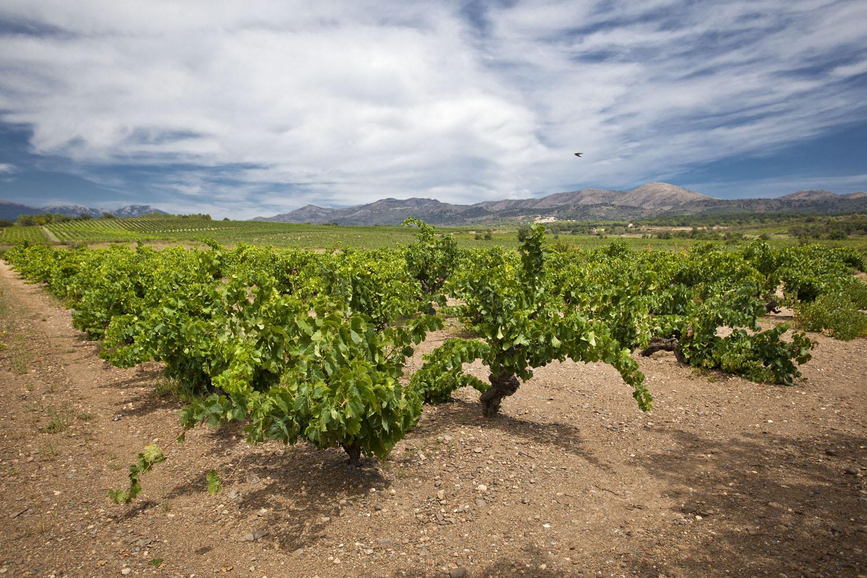 Catalunya-vi-cava-denominacio-origen-cellers-vinya 017