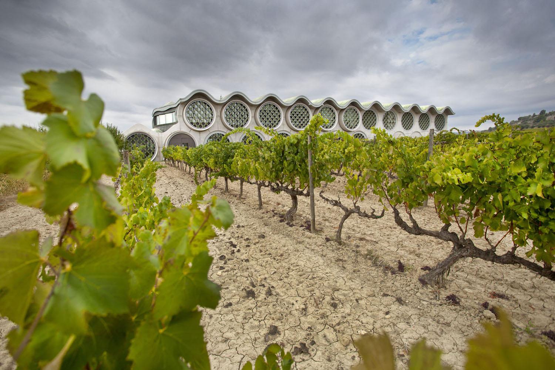 Catalunya-vi-cava-denominacio-origen-cellers-vinya 018