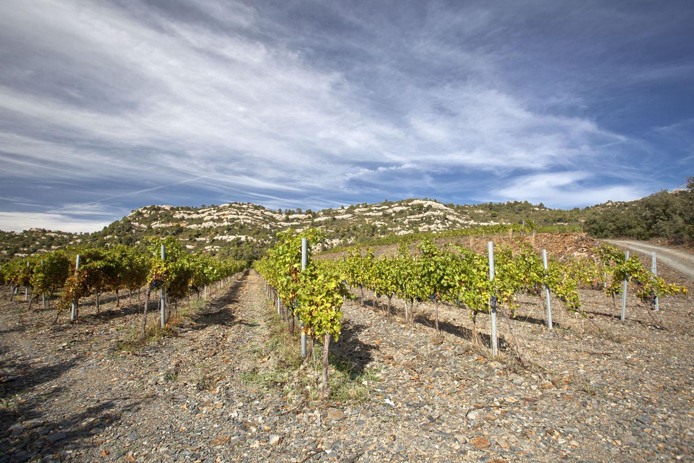 Catalunya-vi-cava-denominacio-origen-cellers-vinya 022